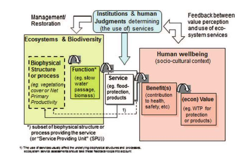 Ecosystem Services are the direct and indirect flux of