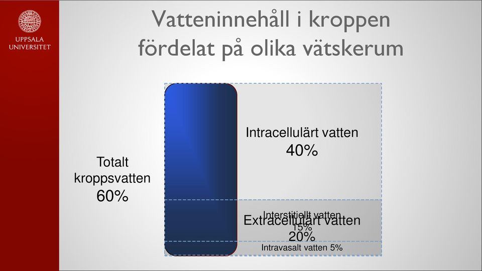 Intracellulärt vatten 40% Interstitiellt