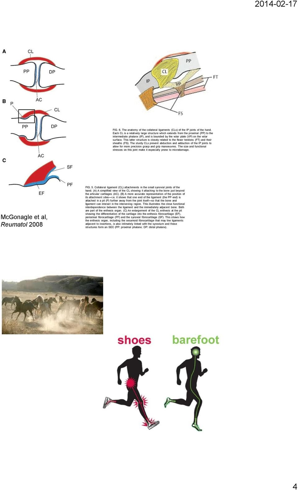 BACKGROUND PHYSIOLOGY - Kinematics of the knee