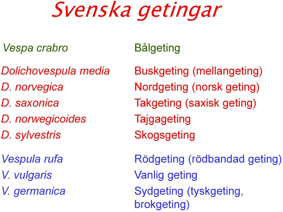 saxonica Takgeting (saxisk geting) D. norwegicoides Tajgageting D.