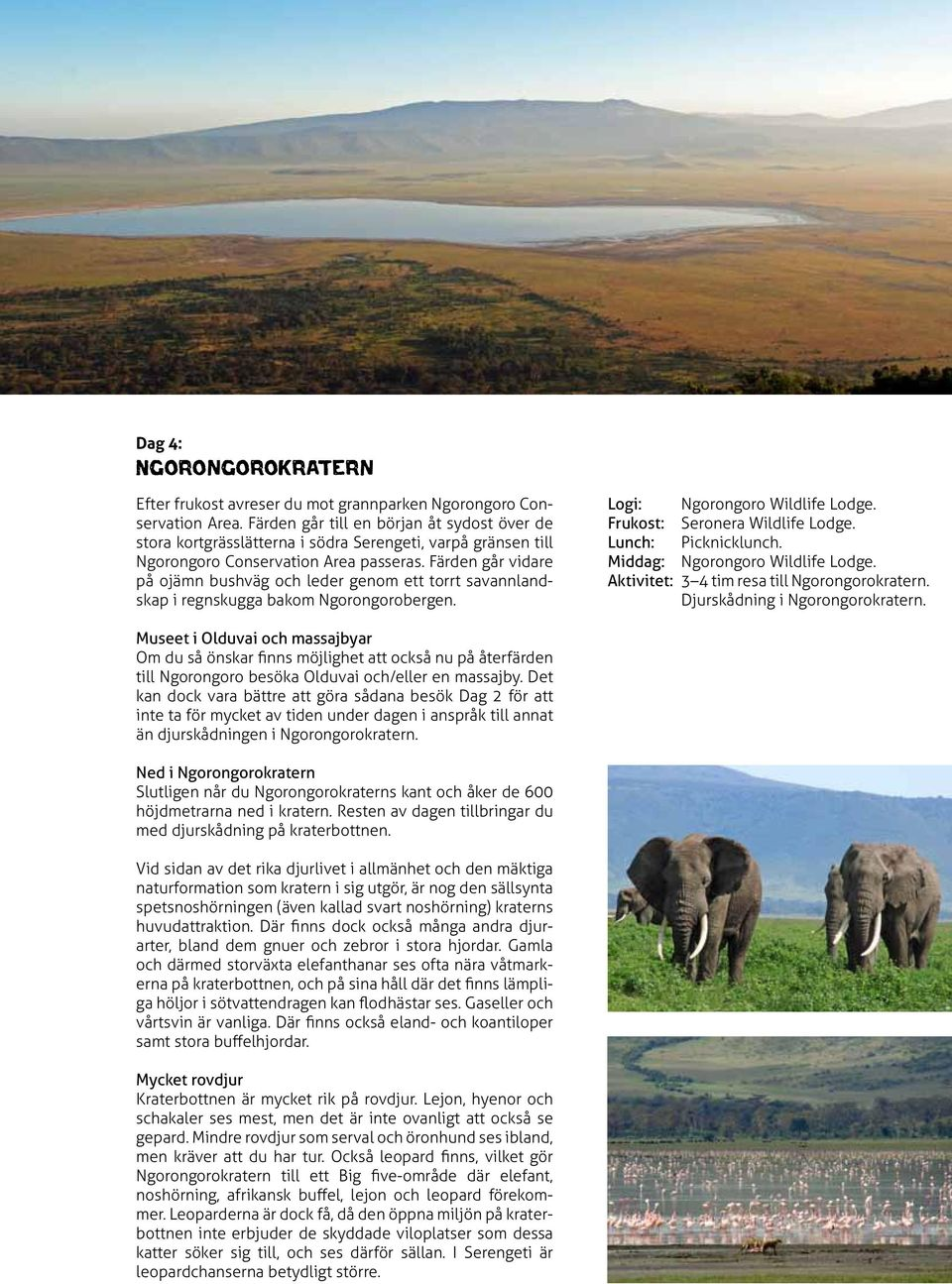 Färden går vidare på ojämn bushväg och leder genom ett torrt savannlandskap i regnskugga bakom Ngorongorobergen. Logi: Ngorongoro Wildlife Lodge. Frukost: Seronera Wildlife Lodge.