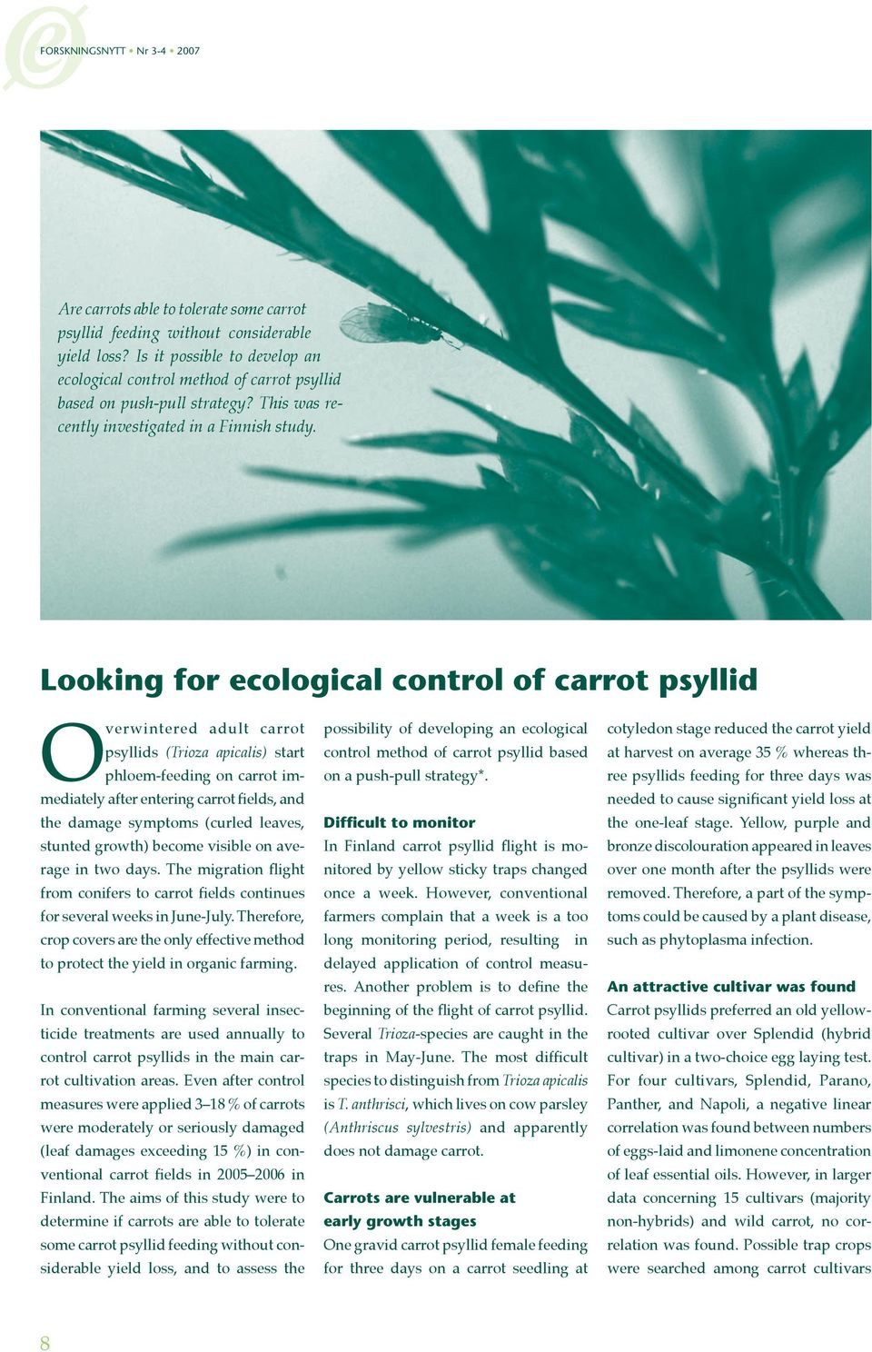 Looking for ecological control of carrot psyllid Overwintered adult carrot psyllids (Trioza apicalis) start phloem-feeding on carrot immediately after entering carrot fields, and the damage symptoms