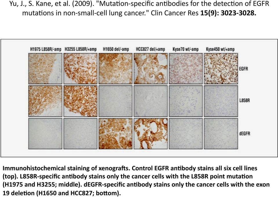 """ Clin Cancer Res 15(9): 3023 3028. Immunohistochemical staining of xenograds."