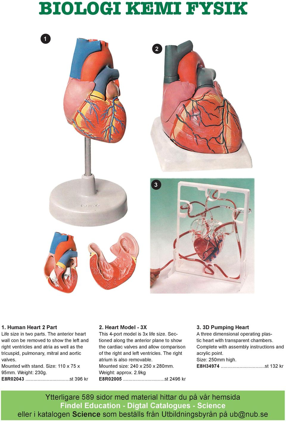 Weight: 230g. E8R02043...st 396 kr 2. Heart Model - 3X This 4-port model is 3x life size.