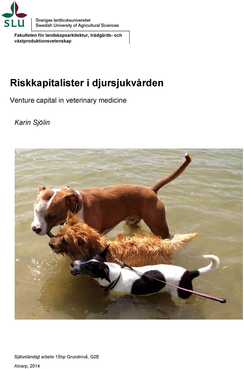 djursjukvården Venture capital in veterinary medicine