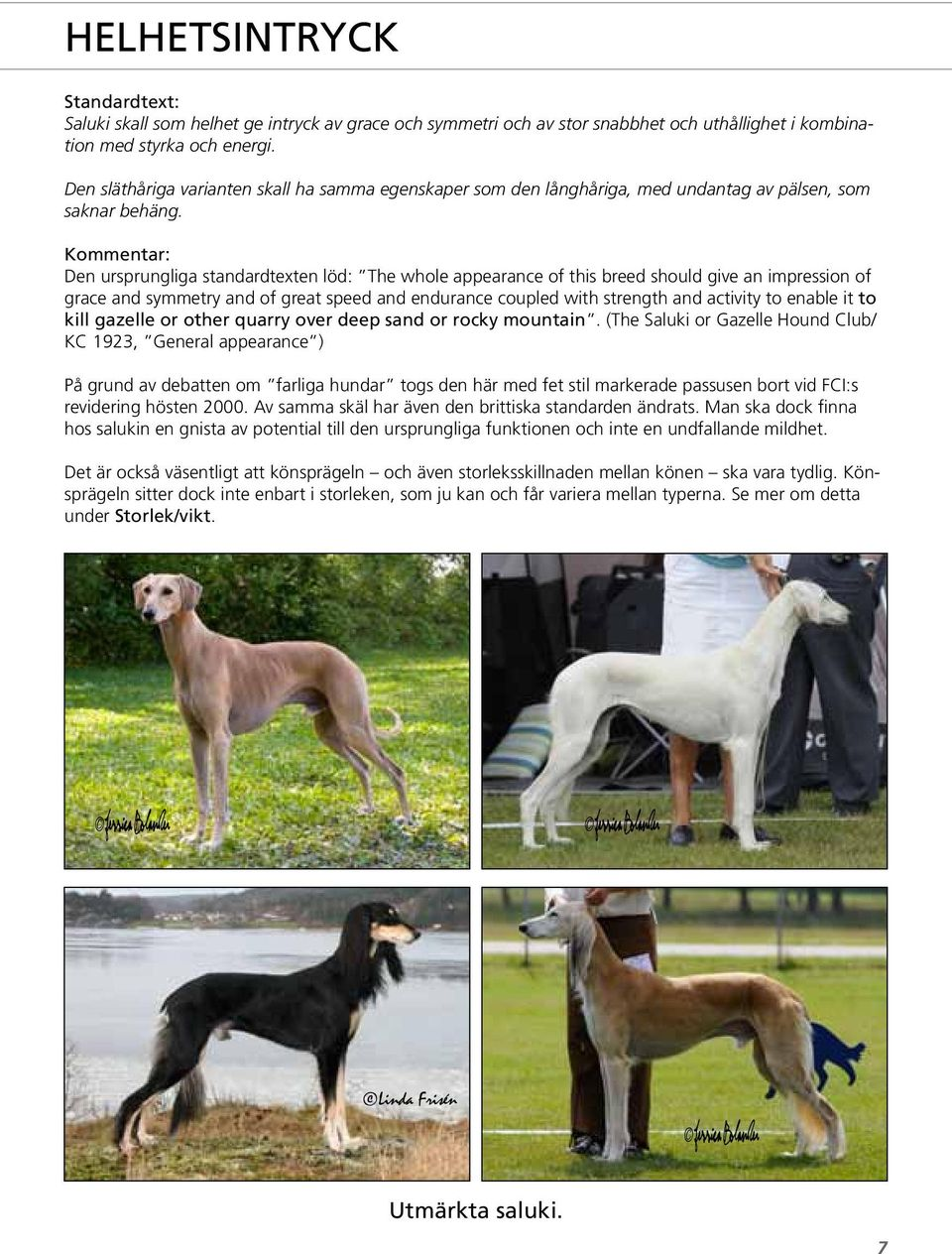 Den ursprungliga standardtexten löd: The whole appearance of this breed should give an impression of grace and symmetry and of great speed and endurance coupled with strength and activity to enable