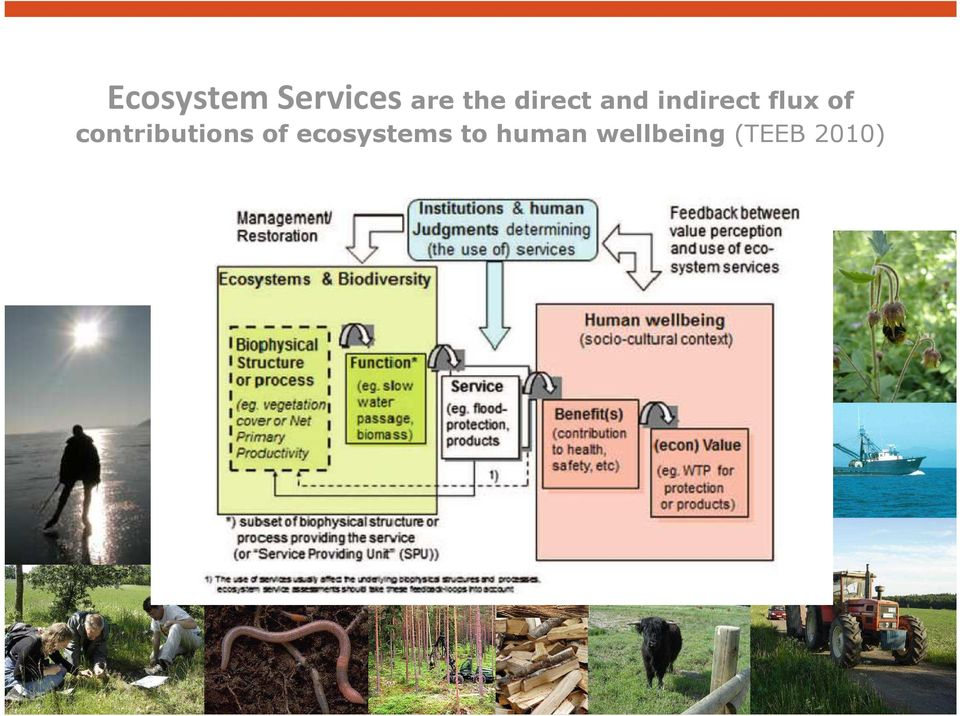 contributions of ecosystems