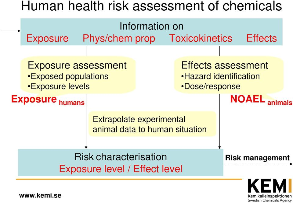 humans Effects assessment Hazard identification Dose/response NOAEL animals Extrapolate
