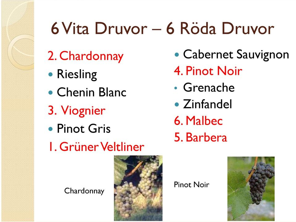 Viognier Pinot Gris 1.