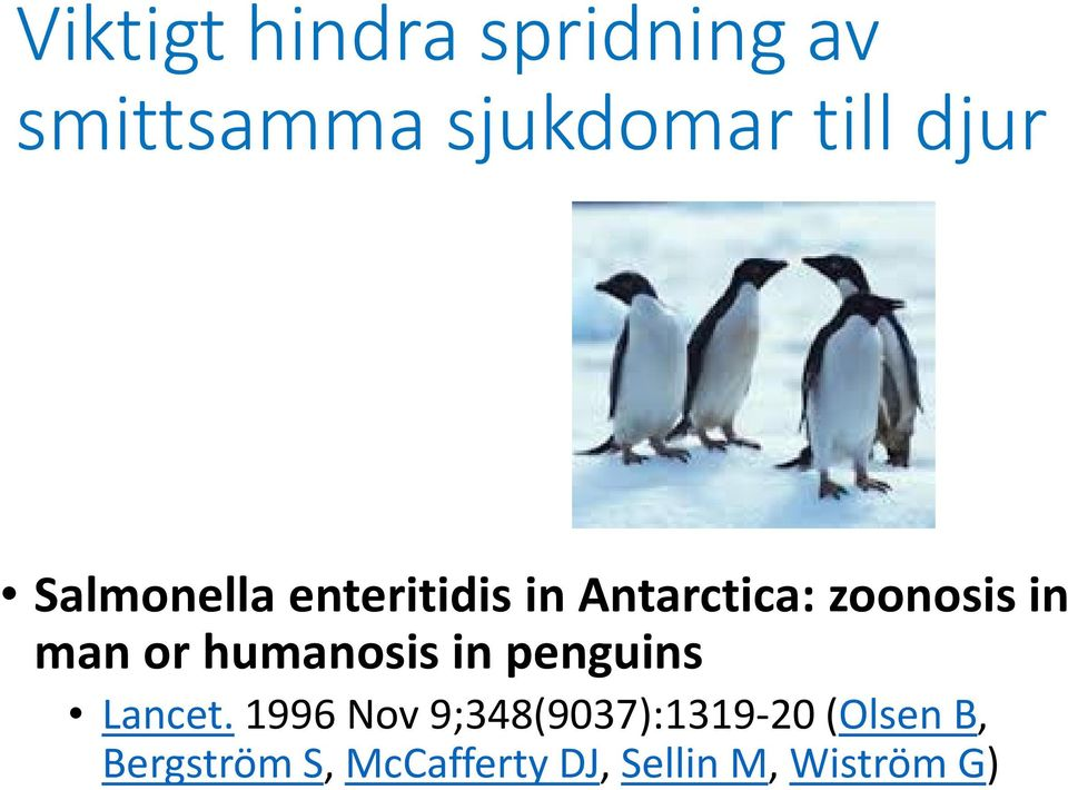 or humanosis in penguins Lancet.