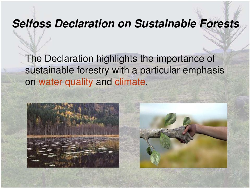 importance of sustainable forestry with a
