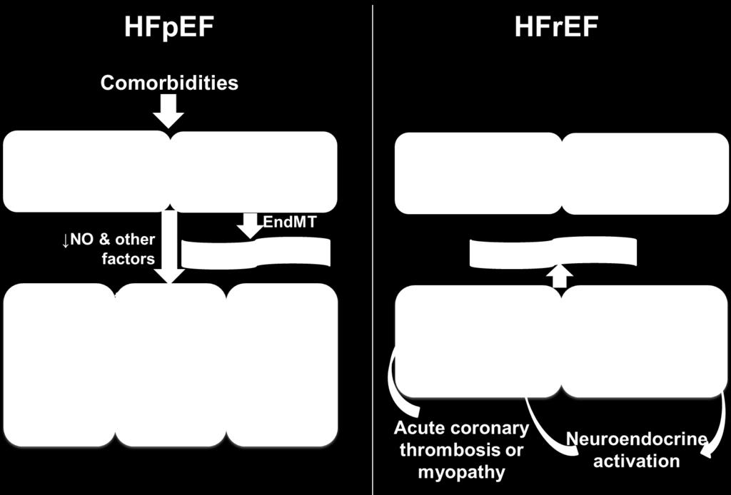 HFpEF innovation: new drug targets, men misslyckats hittills Men: ESC-HF, ESC, AHA: